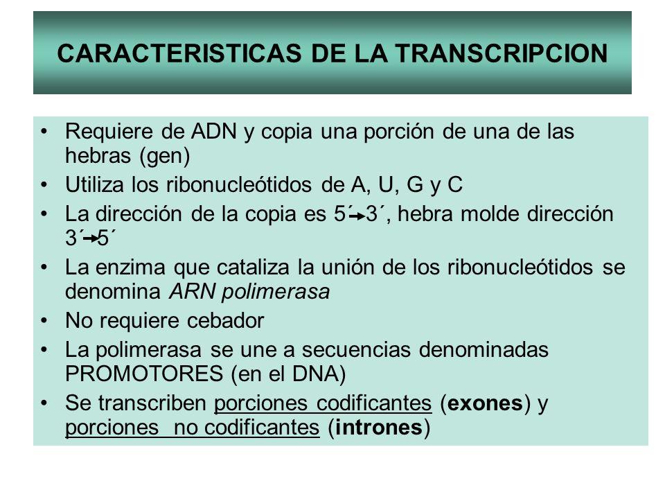 CARACTERISTICAS DE LA TRANSCRIPCION Requiere de ADN y copia una porción de una de las hebras (gen) Utiliza los ribonucleótidos de A, U, G y C La direc