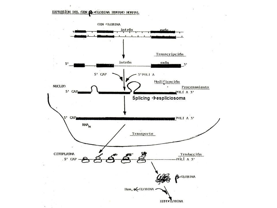 Splicing espliciosoma