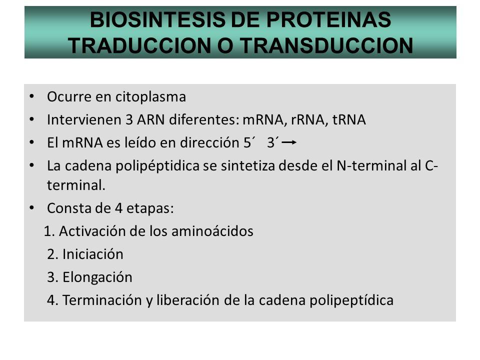 BIOSINTESIS DE PROTEINAS TRADUCCION O TRANSDUCCION Ocurre en citoplasma Intervienen 3 ARN diferentes: mRNA, rRNA, tRNA El mRNA es leído en dirección 5