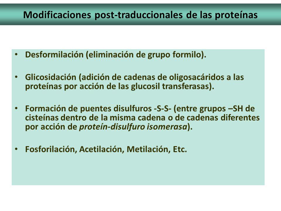 Desformilación (eliminación de grupo formilo). Glicosidación (adición de cadenas de oligosacáridos a las proteínas por acción de las glucosil transfer