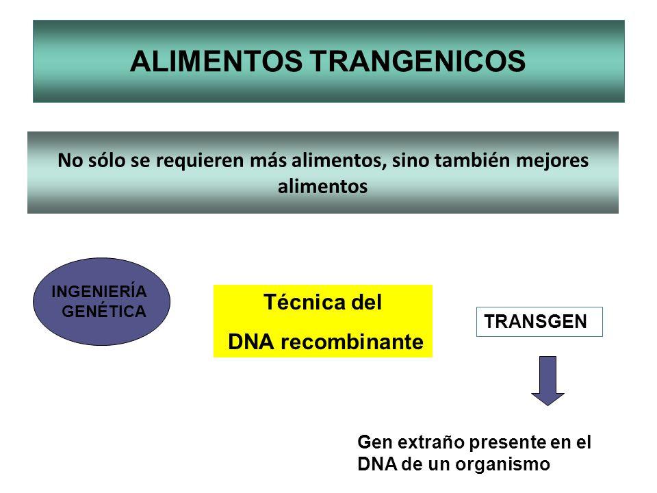 ALIMENTOS TRANGENICOS No sólo se requieren más alimentos, sino también mejores alimentos Técnica del DNA recombinante INGENIERÍA GENÉTICA TRANSGEN Gen