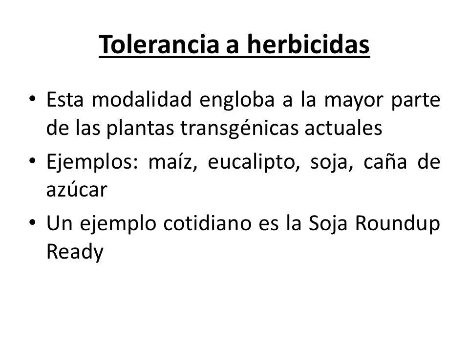 Tolerancia a herbicidas Esta modalidad engloba a la mayor parte de las plantas transgénicas actuales Ejemplos: maíz, eucalipto, soja, caña de azúcar U