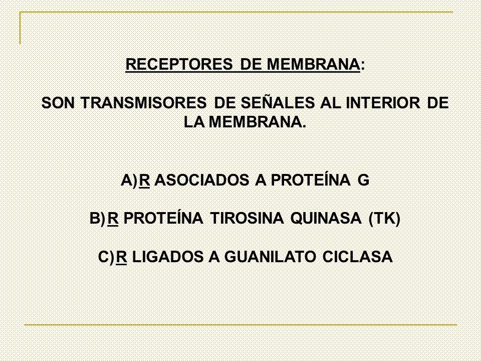 RECEPTORES DE MEMBRANA: SON TRANSMISORES DE SEÑALES AL INTERIOR DE LA MEMBRANA. A)R ASOCIADOS A PROTEÍNA G B)R PROTEÍNA TIROSINA QUINASA (TK) C)R LIGA