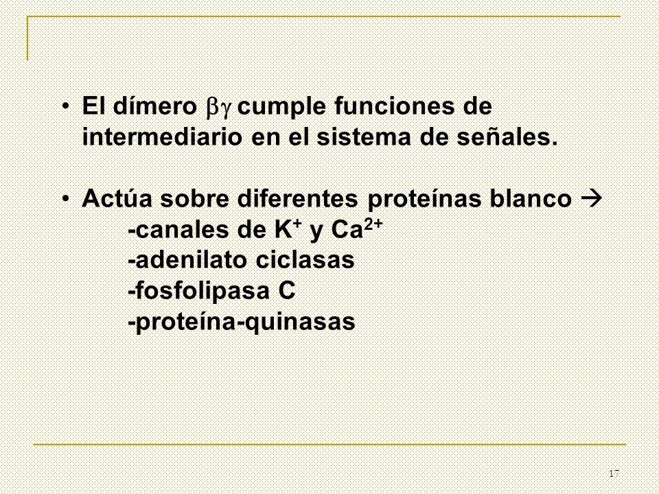 17 El dímero cumple funciones de intermediario en el sistema de señales. Actúa sobre diferentes proteínas blanco -canales de K + y Ca 2+ -adenilato ci