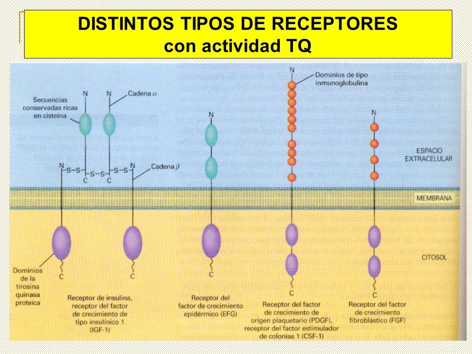 DISTINTOS TIPOS DE RECEPTORES con actividad TQ