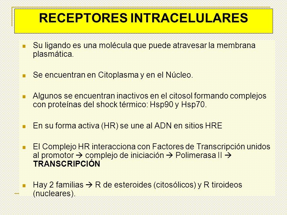 RECEPTORES INTRACELULARES Su ligando es una molécula que puede atravesar la membrana plasmática. Se encuentran en Citoplasma y en el Núcleo. Algunos s