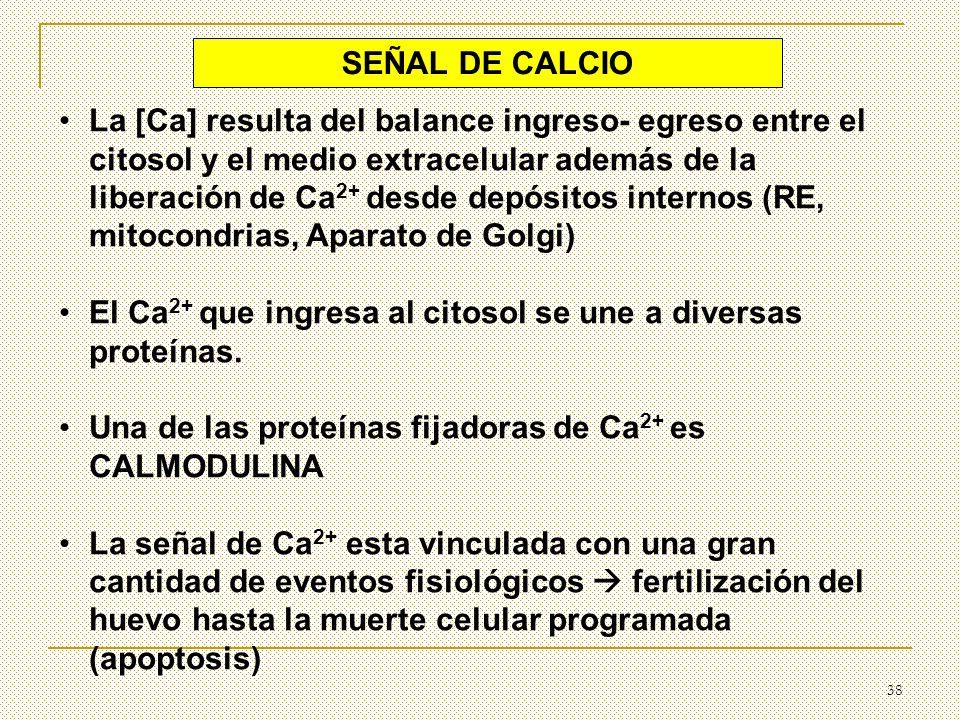 38 SEÑAL DE CALCIO La [Ca] resulta del balance ingreso- egreso entre el citosol y el medio extracelular además de la liberación de Ca 2+ desde depósit
