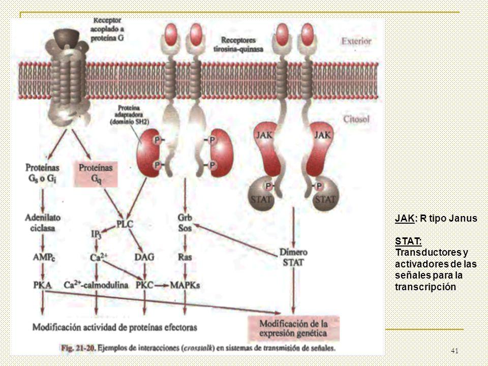 41 JAK: R tipo Janus STAT: Transductores y activadores de las señales para la transcripción