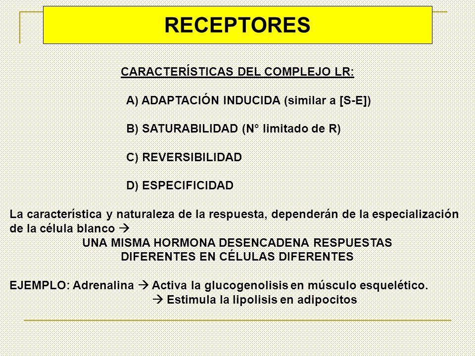 TIPOS DE RECEPTORES SEGÚN SU LOCALIZACIÓN RECEPTORES INTRACELULARES LOS L DIFUNDEN A TRAVÉS DE LAS MEMBRANAS [HR] INTERACTÚA DIRECTAMENTE CON EL ADN NUCLEAR REGULAN LA ACTIVIDAD DE TRANSCRIPCIÓN RECEPTORES CITOPLASMATICOS RECEPTORES NUCLEARES Fijan hormonas polipeptídicas y eicosanoides Fijan factores de crecimiento ó factores mitógenos Fijan proteínas plasmáticas u otras sustancias que penetran a la célula con el receptor.