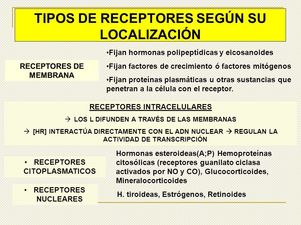 RECEPTORES DE MEMBRANA Receptores -adrenérgicos Receptores de factores de crecimiento Receptor de insulina Receptor de acetilcolina