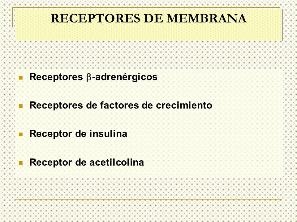 RECEPTORES DE MEMBRANA: SON TRANSMISORES DE SEÑALES AL INTERIOR DE LA MEMBRANA.