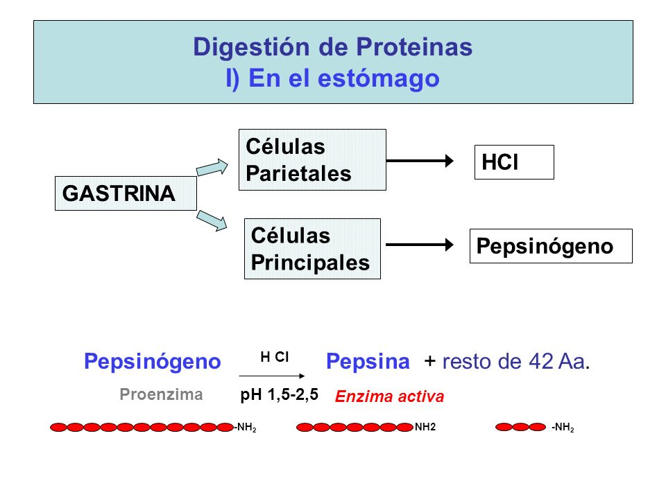 -NH 2 NH2 -NH 2 Pepsinógeno H Cl Pepsina + resto de 42 Aa.