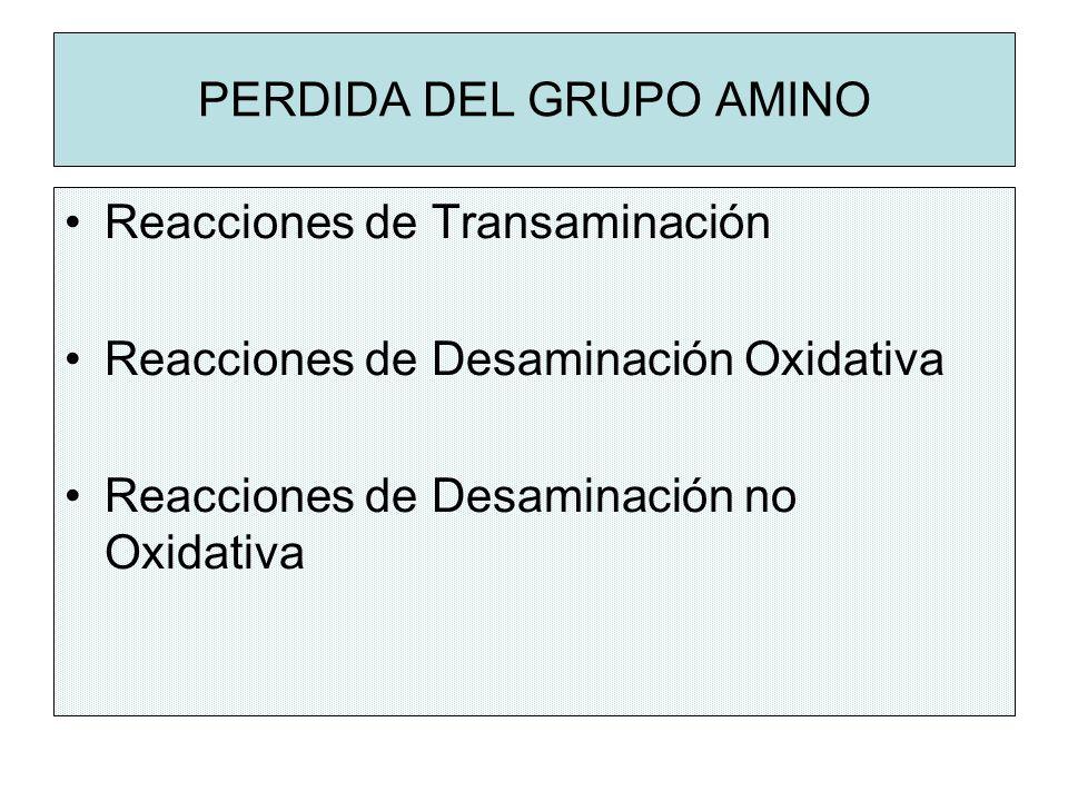 PERDIDA DEL GRUPO AMINO Reacciones de Transaminación Reacciones de Desaminación Oxidativa Reacciones de Desaminación no Oxidativa