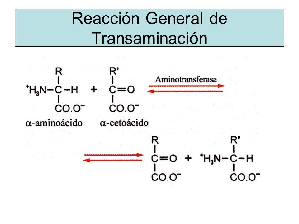 Reacción General de Transaminación
