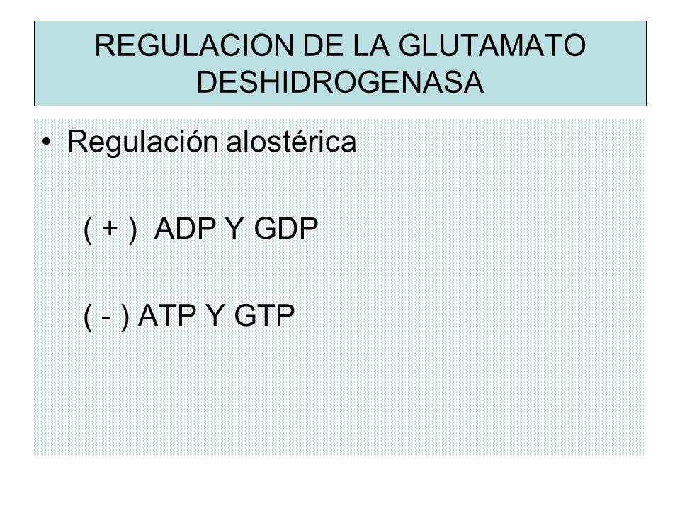 REGULACION DE LA GLUTAMATO DESHIDROGENASA Regulación alostérica ( + ) ADP Y GDP ( - ) ATP Y GTP