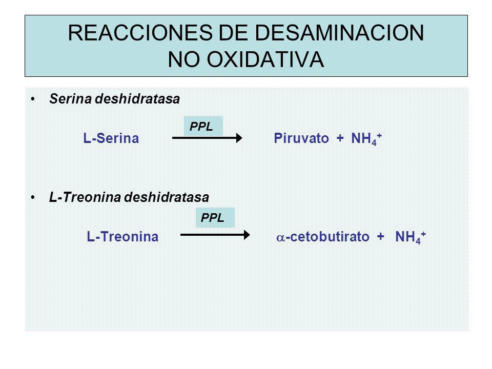 REACCIONES DE DESAMINACION NO OXIDATIVA Serina deshidratasa L-Serina Piruvato + NH 4 + L-Treonina deshidratasa L-Treonina -cetobutirato + NH 4 + PPL