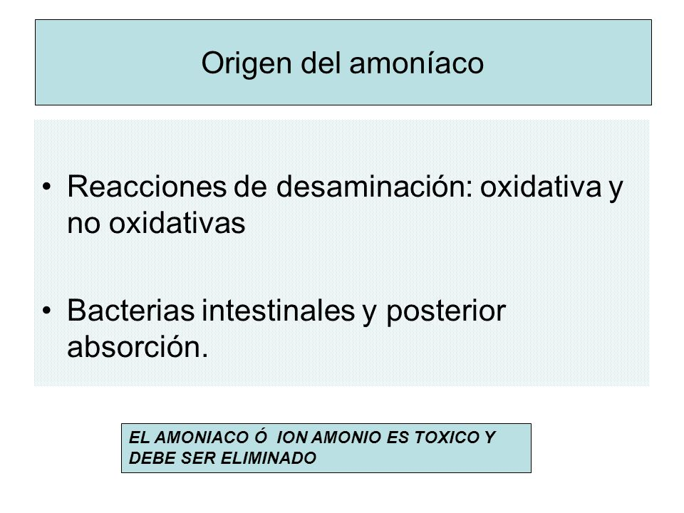 Origen del amoníaco Reacciones de desaminación: oxidativa y no oxidativas Bacterias intestinales y posterior absorción.
