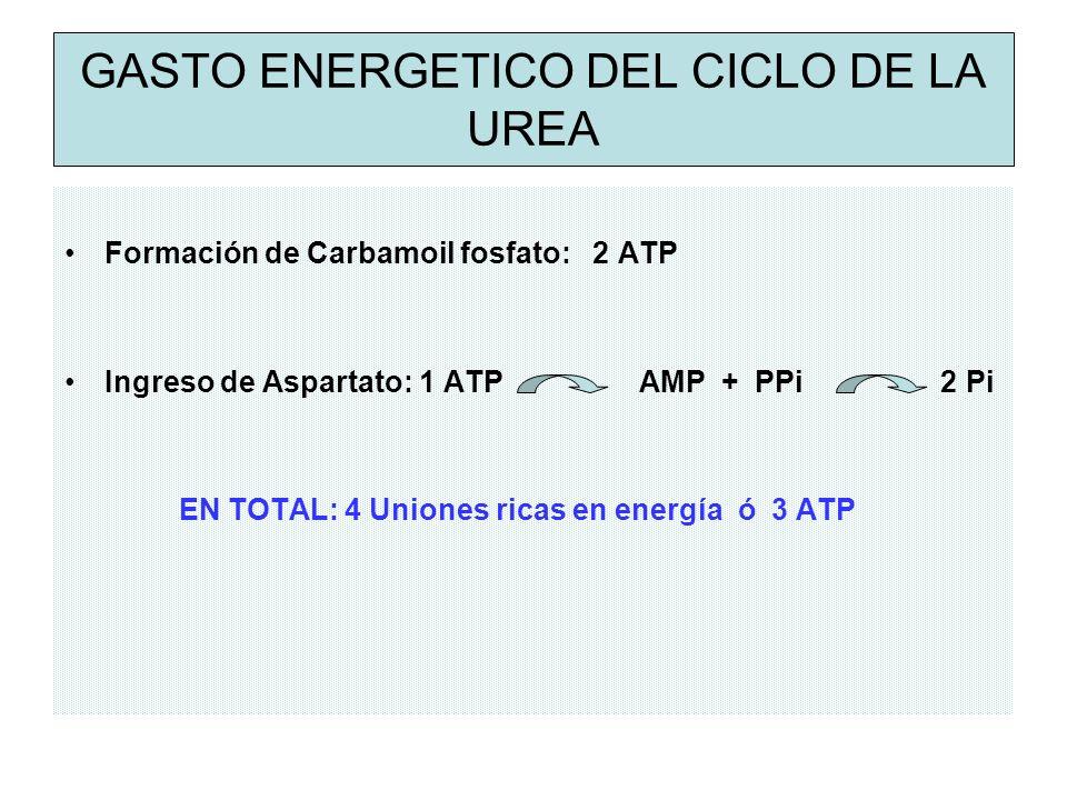 GASTO ENERGETICO DEL CICLO DE LA UREA Formación de Carbamoil fosfato: 2 ATP Ingreso de Aspartato: 1 ATP AMP + PPi 2 Pi EN TOTAL: 4 Uniones ricas en energía ó 3 ATP