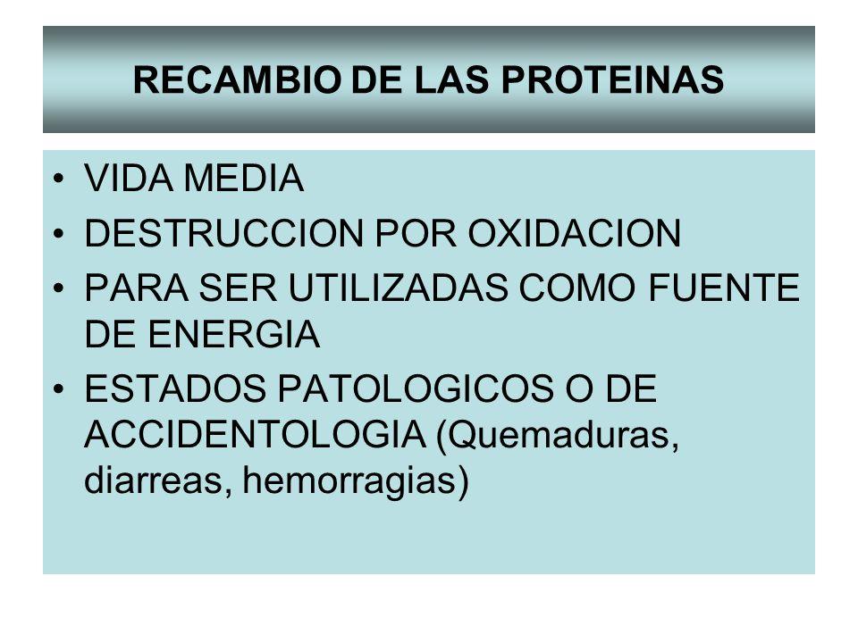RECAMBIO DE LAS PROTEINAS VIDA MEDIA DESTRUCCION POR OXIDACION PARA SER UTILIZADAS COMO FUENTE DE ENERGIA ESTADOS PATOLOGICOS O DE ACCIDENTOLOGIA (Quemaduras, diarreas, hemorragias)