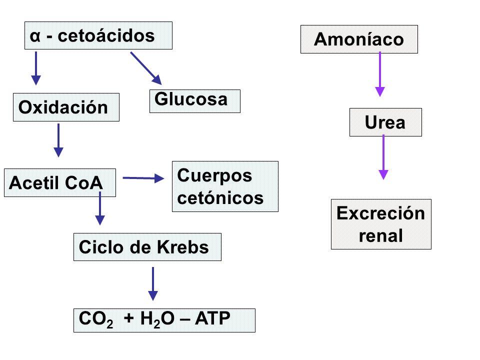 DESTINO DE LOS AMINOÁCIDOS EN LA CELULA Biosíntesis: Proteínas, Compuestos no proteicos, etc.
