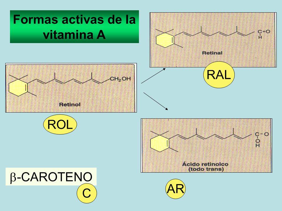 AR ROL -CAROTENO C RAL Formas activas de la vitamina A