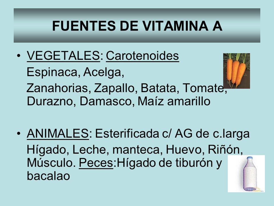 FUENTES DE VITAMINA A VEGETALES: Carotenoides Espinaca, Acelga, Zanahorias, Zapallo, Batata, Tomate, Durazno, Damasco, Maíz amarillo ANIMALES: Esterif