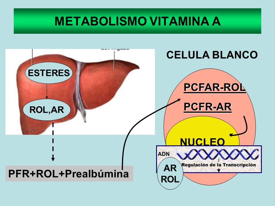 METABOLISMO VITAMINA A ESTERES ROL,AR PFR+ROL+Prealbúmina CELULA BLANCO NUCLEO PCFAR-ROLPCFR-AR AR ROL