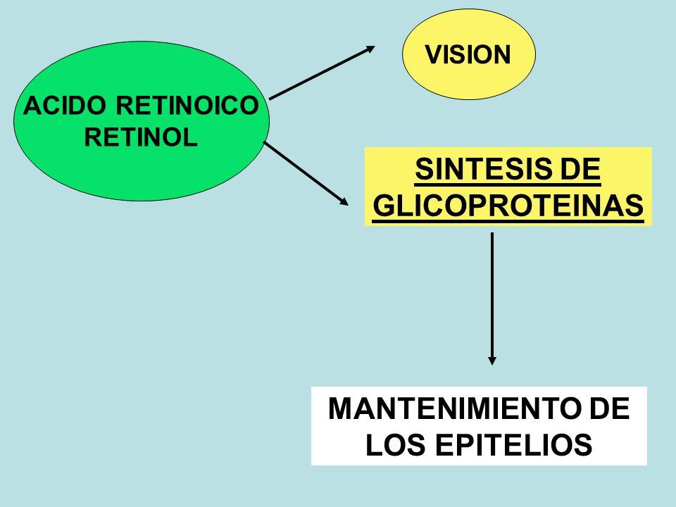 ACIDO RETINOICO RETINOL VISION SINTESIS DE GLICOPROTEINAS MANTENIMIENTO DE LOS EPITELIOS