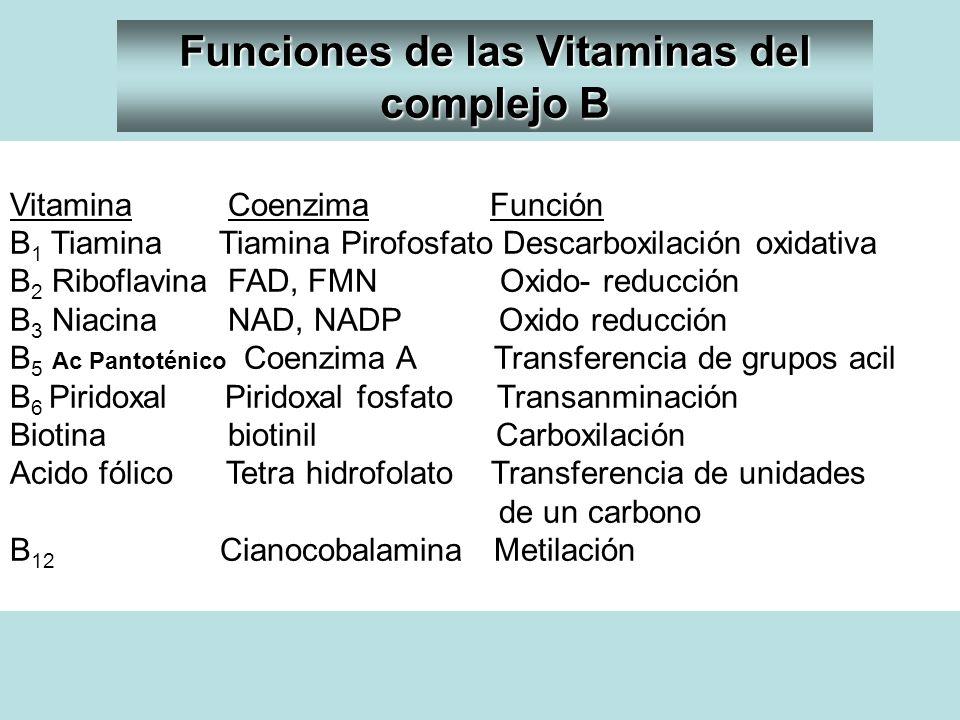Vitamina CoenzimaFunción B 1 Tiamina Tiamina Pirofosfato Descarboxilación oxidativa B 2 Riboflavina FAD, FMN Oxido- reducción B 3 Niacina NAD, NADP Ox
