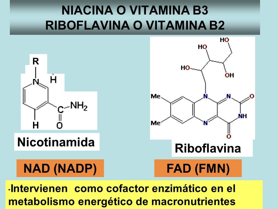 NIACINA O VITAMINA B3 RIBOFLAVINA O VITAMINA B2 Riboflavina FAD (FMN) + R H Nicotinamida NAD (NADP) Intervienen como cofactor enzimático en el metabol