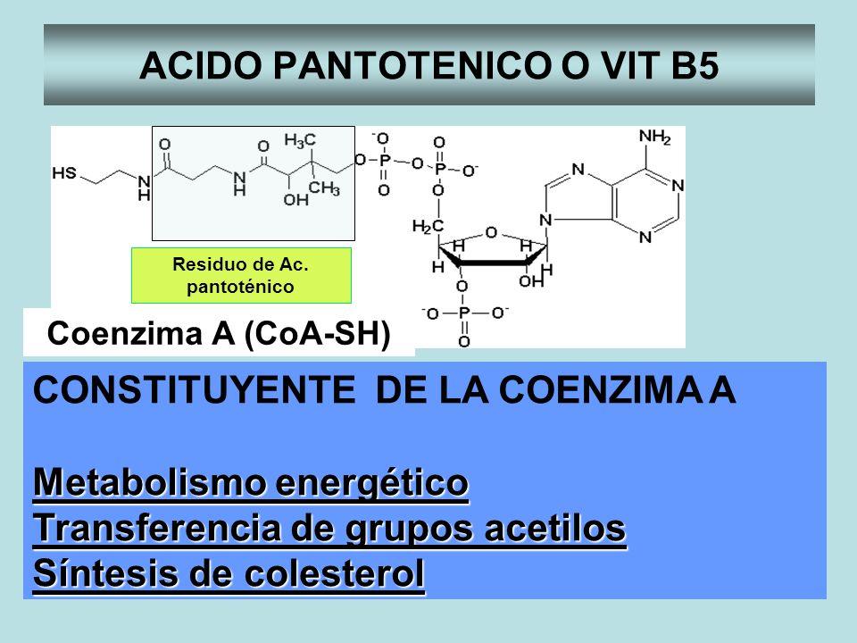 Coenzima A (CoA-SH) ACIDO PANTOTENICO O VIT B5 CONSTITUYENTE DE LA COENZIMA A Metabolismo energético Transferencia de grupos acetilos Síntesis de cole