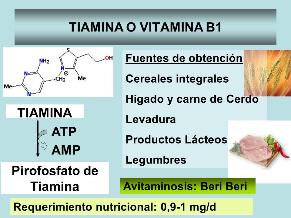 TIAMINA O VITAMINA B1 TIAMINA Pirofosfato de Tiamina ATP AMP Avitaminosis: Beri Beri Requerimiento nutricional: 0,9-1 mg/d Fuentes de obtención Cereal