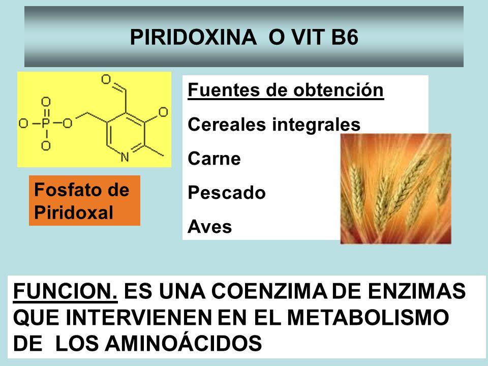 PIRIDOXINA O VIT B6 Fosfato de Piridoxal FUNCION. ES UNA COENZIMA DE ENZIMAS QUE INTERVIENEN EN EL METABOLISMO DE LOS AMINOÁCIDOS Fuentes de obtención