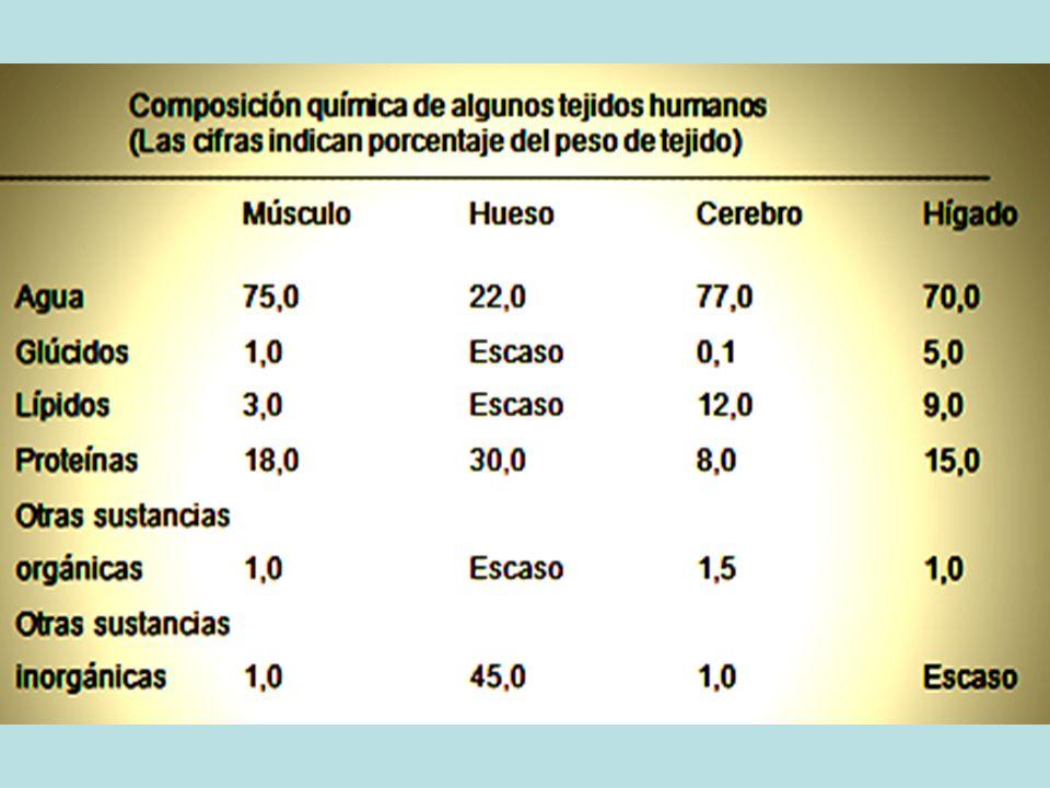 DISPONIBILIDAD DE VITAMINA E AVITAMINOSIS: GLÓBULOS ROJOS.Produce cierta fragilidad en los GLÓBULOS ROJOS.