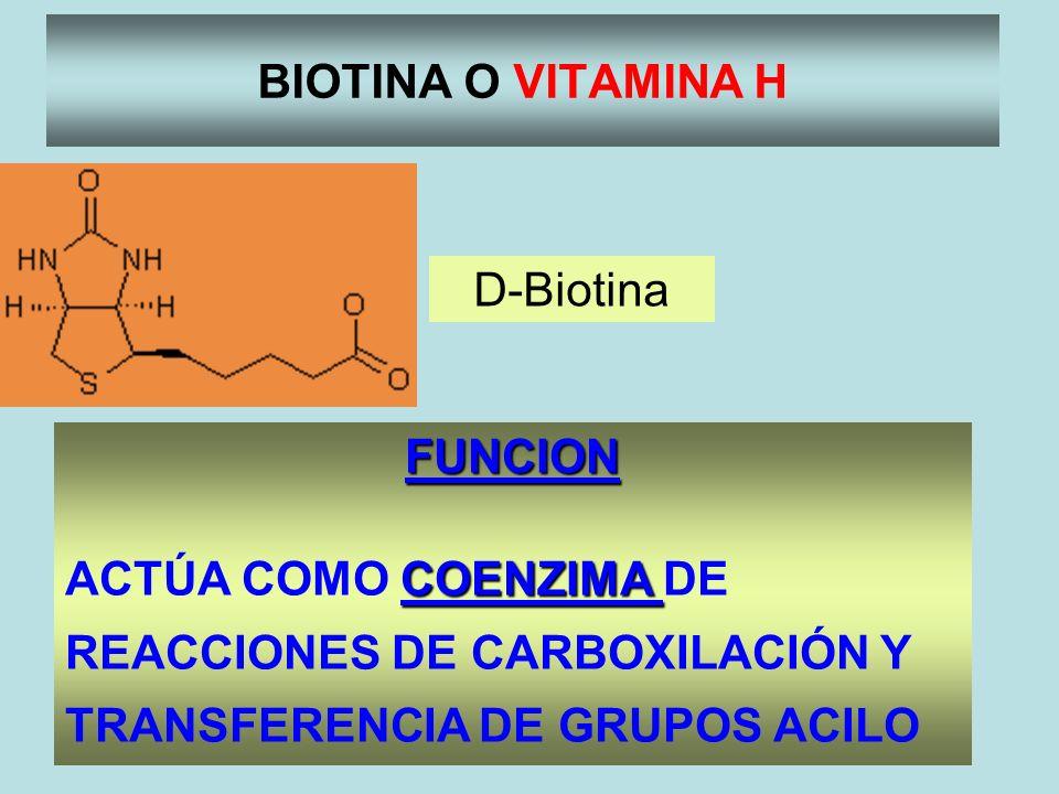 BIOTINA O VITAMINA H FUNCION COENZIMA ACTÚA COMO COENZIMA DE REACCIONES DE CARBOXILACIÓN Y TRANSFERENCIA DE GRUPOS ACILO D-Biotina