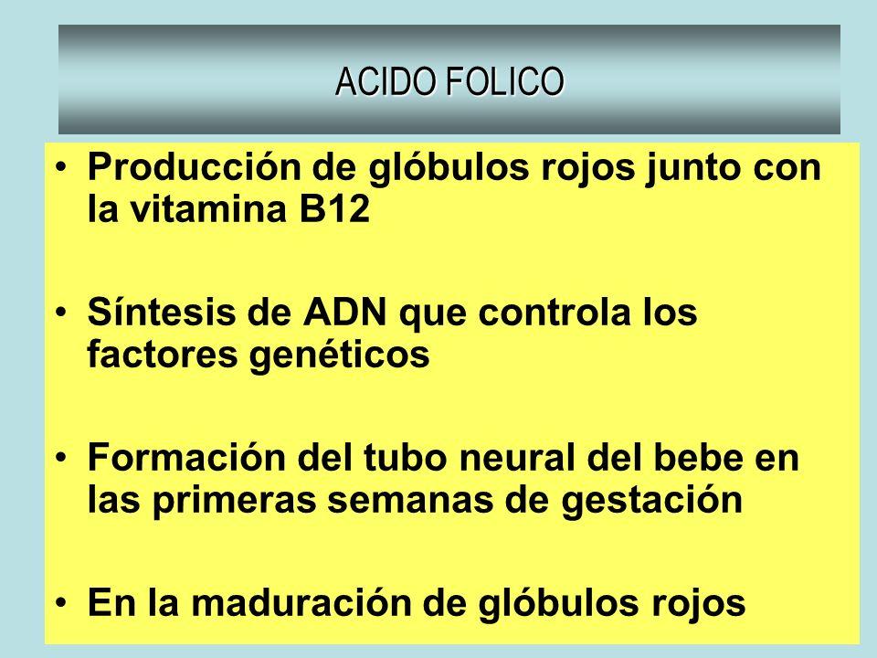 ACIDO FOLICO Producción de glóbulos rojos junto con la vitamina B12 Síntesis de ADN que controla los factores genéticos Formación del tubo neural del