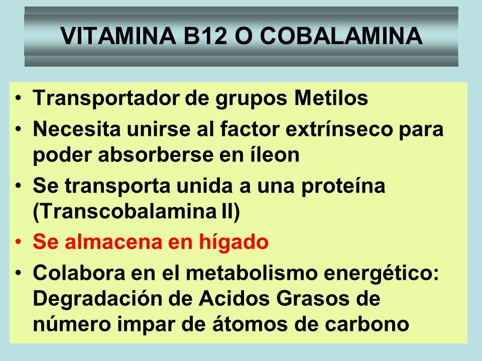 VITAMINA B12 Transportador de grupos Metilos Necesita unirse al factor extrínseco para poder absorberse en íleon Se transporta unida a una proteína (T
