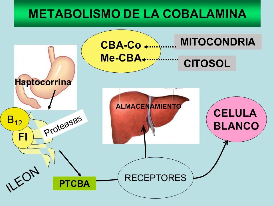 METABOLISMO DE LA COBALAMINA CBA-Co Me-CBA CELULA BLANCO Haptocorrina Proteasas FI B 12 ILEON PTCBA CITOSOL MITOCONDRIA ALMACENAMIENTO RECEPTORES