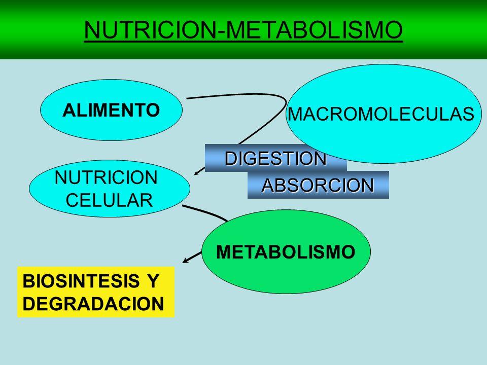 NUTRICION-METABOLISMO ALIMENTO NUTRICION CELULAR BIOSINTESIS Y DEGRADACION DIGESTION ABSORCION MACROMOLECULAS METABOLISMO