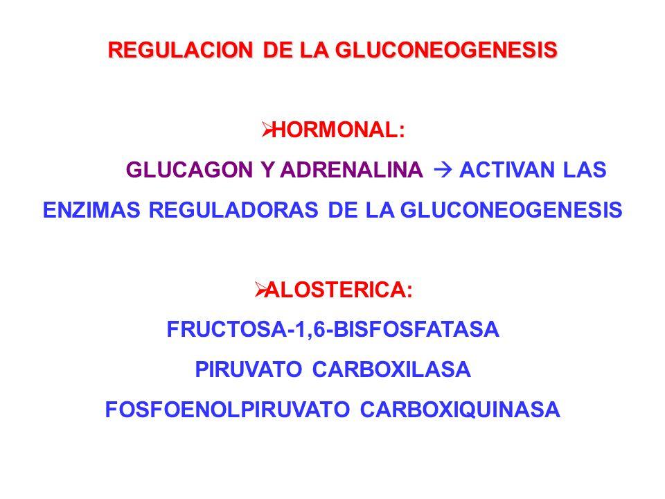 REGULACION DE LA GLUCONEOGENESIS HORMONAL: GLUCAGON Y ADRENALINA ACTIVAN LAS ENZIMAS REGULADORAS DE LA GLUCONEOGENESIS ALOSTERICA: FRUCTOSA-1,6-BISFOS