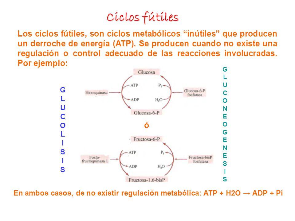 Ciclos fútiles Los ciclos fútiles, son ciclos metabólicos inútiles que producen un derroche de energía (ATP). Se producen cuando no existe una regulac