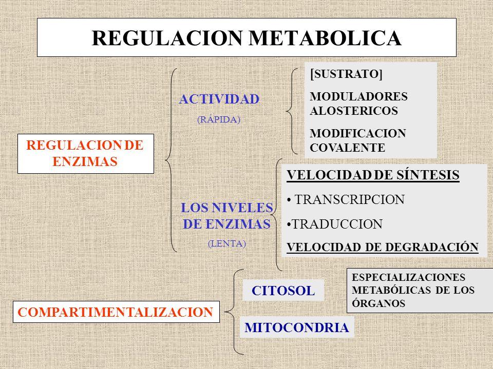 REGULACION METABOLICA REGULACION DE ENZIMAS COMPARTIMENTALIZACION ACTIVIDAD LOS NIVELES DE ENZIMAS (LENTA) [ SUSTRATO] MODULADORES ALOSTERICOS MODIFIC