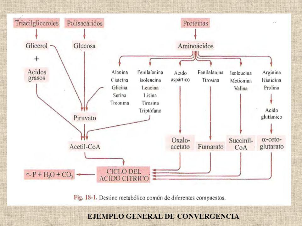EJEMPLO GENERAL DE CONVERGENCIA