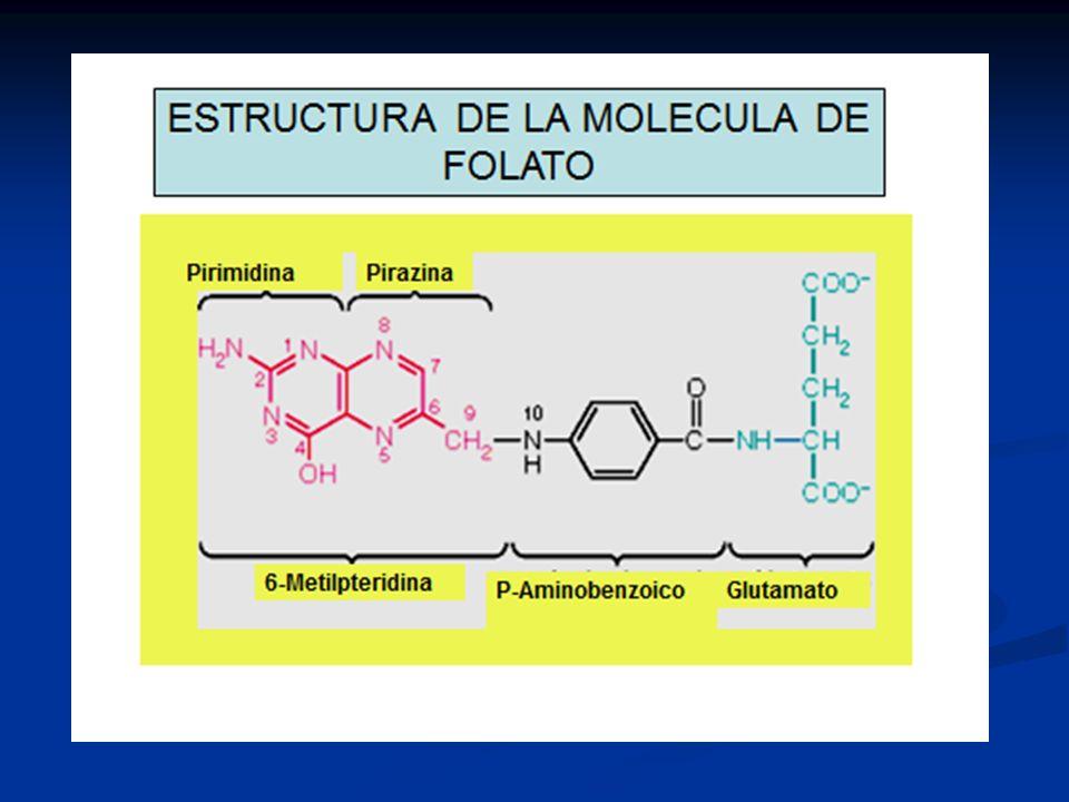 Importancia del Hemo CITOCROMOS: Sistemas de transporte de electrones CITOCROMOS: Sistemas de transporte de electrones MIOGLOBINA: Reserva de oxígeno en músculo esquelético y cardíaco MIOGLOBINA: Reserva de oxígeno en músculo esquelético y cardíaco HEMOGLOBINA: Transporte de Oxígeno a los tejidos.