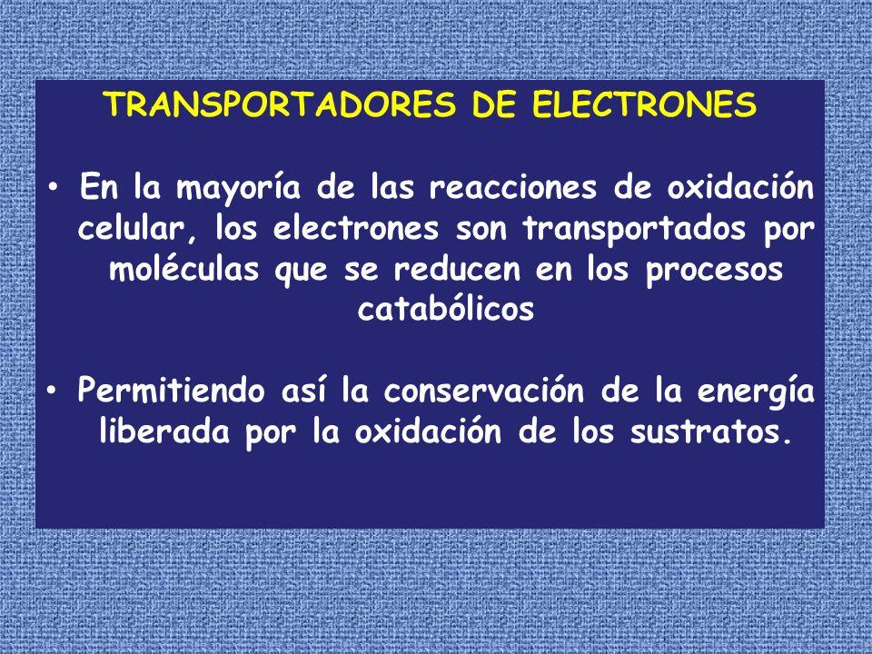 TRANSPORTADORES DE ELECTRONES En la mayoría de las reacciones de oxidación celular, los electrones son transportados por moléculas que se reducen en l