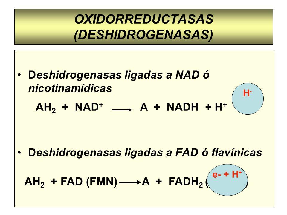 OXIDORREDUCTASAS (DESHIDROGENASAS) Deshidrogenasas ligadas a NAD ó nicotinamídicas Deshidrogenasas ligadas a FAD ó flavínicas AH 2 + NAD + A + NADH +