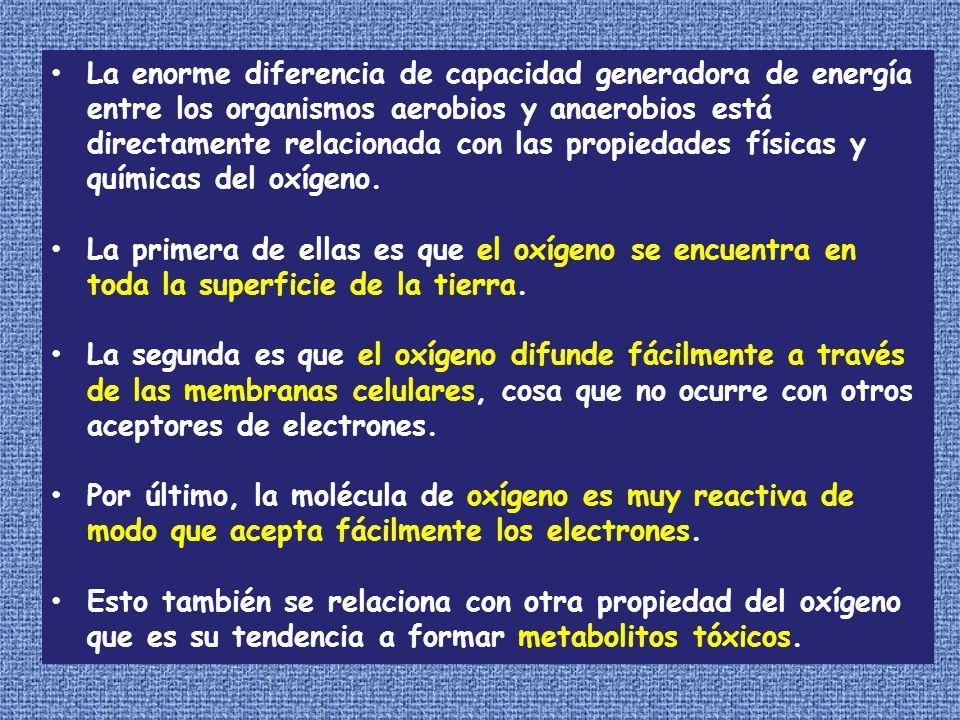 La enorme diferencia de capacidad generadora de energía entre los organismos aerobios y anaerobios está directamente relacionada con las propiedades f