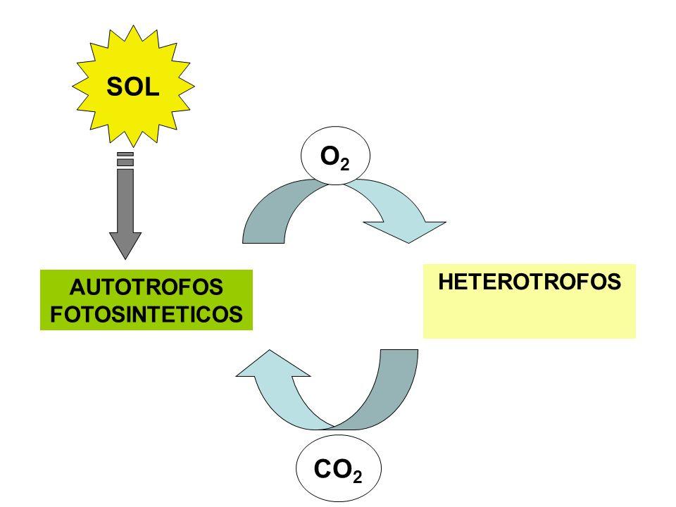 Flujo de electrones en las oxido-reducciones biológicas