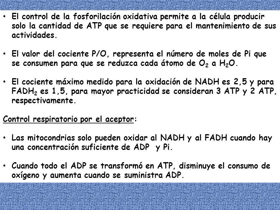 El control de la fosforilación oxidativa permite a la célula producir solo la cantidad de ATP que se requiere para el mantenimiento de sus actividades