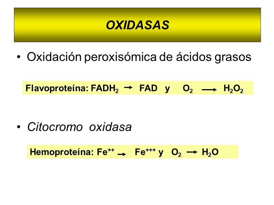 OXIDASAS Oxidación peroxisómica de ácidos grasos Citocromo oxidasa Flavoproteína: FADH 2 FAD y O 2 H 2 O 2 Hemoproteína: Fe ++ Fe +++ y O 2 H 2 O